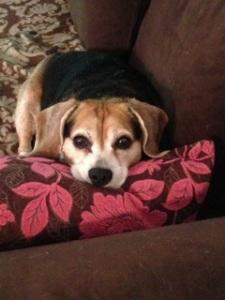 Bella on pink pillow
